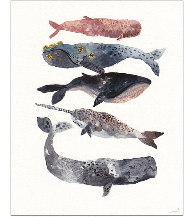 whale watercolor art