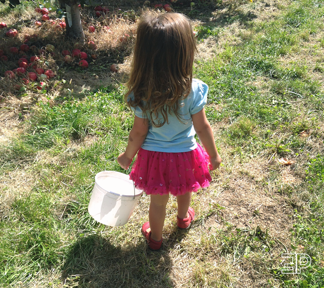 Young girl apple picking at Bills Berry Farm in Yakima, WA - via The Emerald Palate