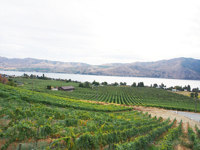 View from Lake Chelan Winery in Lake Chelan, WA. Look at all those vineyards!