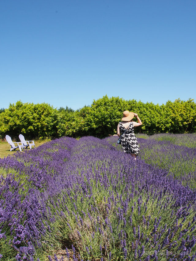 Found of The Emerald Palate among the lavender at Evergreen Lavender Farm in Olympia WA.